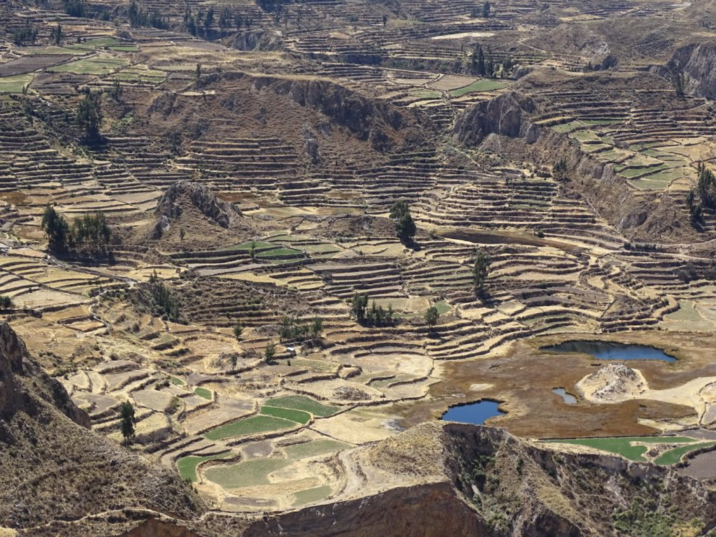 colca canyon 2 day trek