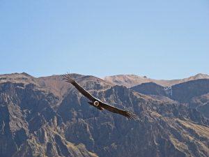 Colca Canyon 2 Day Tour Puno Arequipa