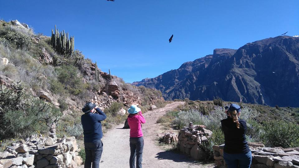 Colca Canyon Trek 1 Day