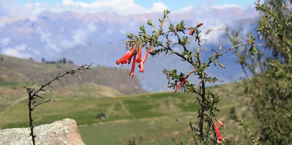 Super Private Colca Canyon Trek 3 Days