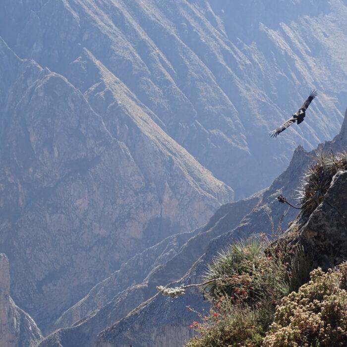 Bomboya Andes Trekking