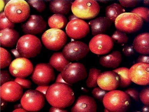 peru fruits