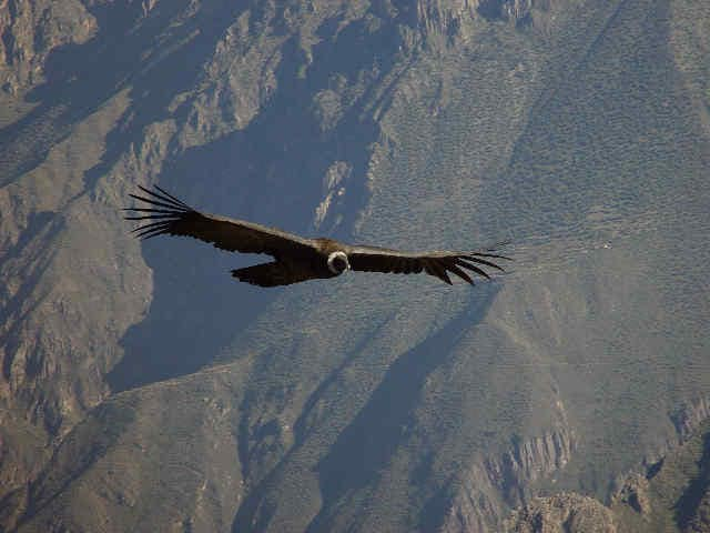 colca canyon full day tour