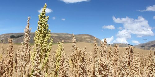Private Colca Canyon Full Day Tour From Arequipa to Puno