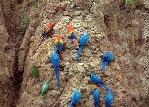 peru-wildlife-observation